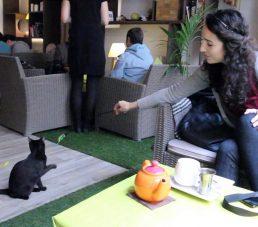 bar à chat lyon